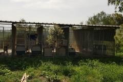 rifugio-narbolia-27-aprile-2018 (12)