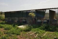 rifugio-narbolia-27-aprile-2018 (14)