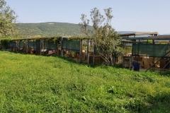 rifugio-narbolia-27-aprile-2018 (15)