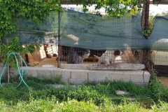rifugio-narbolia-27-aprile-2018 (23)