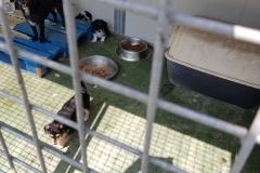 Rifugio di Narbolia 31 agosto 2018 (24)