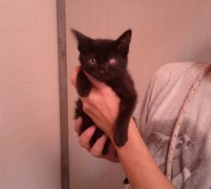 gattina nera sanitario